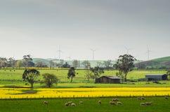 Giacimento del Canola vicino a Ballarat Fotografie Stock Libere da Diritti