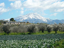 Giacimento del cavolo e della montagna Immagine Stock Libera da Diritti