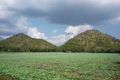 Giacimento del cavolo riccio con le due montagne Immagini Stock Libere da Diritti