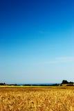 Giacimento del cereale sotto cielo blu immagine stock