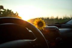 Giacimento del girasole al tramonto, vista nell'automobile fotografia stock