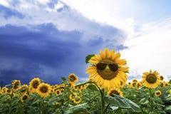 giacimento del girasole con un girasole allegro con gli occhiali da sole Fotografie Stock Libere da Diritti