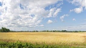 Giacimento del grano primaverile Fotografia Stock