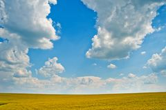 Giacimento del grano saraceno Fotografie Stock Libere da Diritti