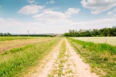 Giacimento del grano saraceno e strada campestre al giorno di molla Fotografia Stock Libera da Diritti