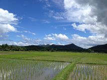 Giacimento del riso immagine stock libera da diritti