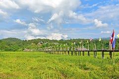 Giacimento del riso al ponte di Zutongpae Fotografie Stock