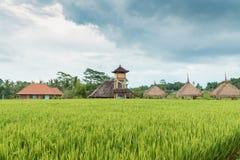 Giacimento del riso in Bali Fotografia Stock Libera da Diritti