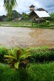 Giacimento del riso, capanna del coltivatore, vista scenica del Bali Immagine Stock Libera da Diritti