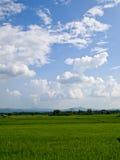 Giacimento del riso con cielo blu Fotografie Stock