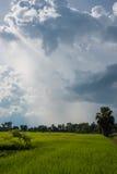 Giacimento del riso con il cielo nuvoloso Immagini Stock Libere da Diritti