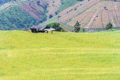 Giacimento del riso con il fondo della montagna a PA Bong Piang, Chiang Mai di divieto in Tailandia, fuoco sul cottage Immagine Stock Libera da Diritti