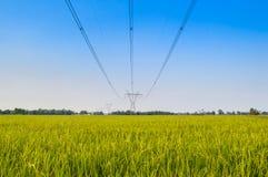 Giacimento del riso con il panicle del riso Immagini Stock Libere da Diritti