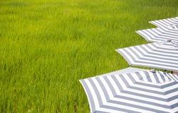 Giacimento del riso con il umbella Fotografia Stock