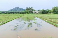 Giacimento del riso con l'acqua piovana prima della stagione di semina con il fondo della montagna, Tailandia Immagini Stock