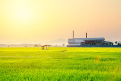 Giacimento del riso con la fabbrica di industria immagini stock libere da diritti
