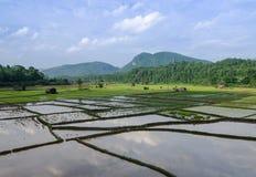 Giacimento del riso con la montagna Fotografia Stock