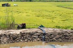 Giacimento del riso con la pompa nel canale Immagine Stock