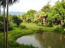 Giacimento del riso con la ruota idraulica di bambù, Tailandia Fotografia Stock Libera da Diritti