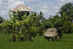 Giacimento del riso con le case dello spirito. Immagine Stock Libera da Diritti