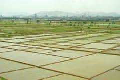 Giacimento del riso con le fabbriche Fotografie Stock Libere da Diritti