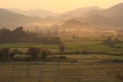 Giacimento del riso con le montagne Immagine Stock
