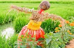 Giacimento del riso con lo spaventapasseri Fotografie Stock Libere da Diritti