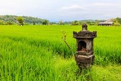 Giacimento del riso con un altare per le offerti, isola di Bali, Indonesia Immagine Stock