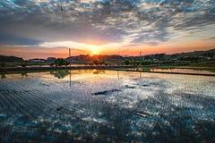 Giacimento del riso in Corea rurale Fotografie Stock
