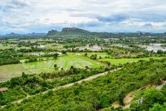 Giacimento del riso dalla vista superiore in Tailandia immagine stock libera da diritti