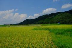 Giacimento del riso davanti alla stazione di Torokko-Kameoka, Kyoto, Giappone fotografia stock libera da diritti