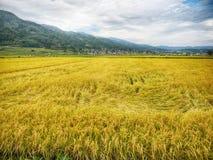 Giacimento del riso del Giappone con il fondo della montagna e del cielo Immagini Stock Libere da Diritti
