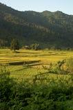 Giacimento del riso del Laos Fotografia Stock Libera da Diritti