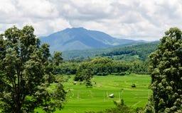 Giacimento del riso del punto di vista e montagna, Tailandia Fotografia Stock