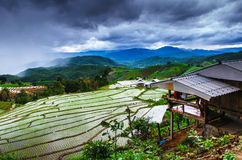 Giacimento del riso del terrazzo Fotografia Stock