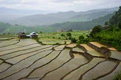 Giacimento del riso del terrazzo Fotografia Stock Libera da Diritti