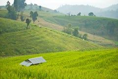 Giacimento del riso del terrazzo con la baracca Fotografia Stock Libera da Diritti