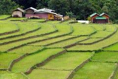 Giacimento del riso del terrazzo e dell'azienda agricola Fotografia Stock Libera da Diritti