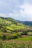 Giacimento del riso del terrazzo sulla collina Fotografia Stock