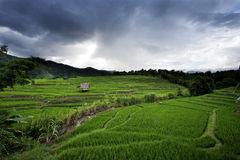 Giacimento del riso del terrazzo in Tailandia del Nord Immagini Stock