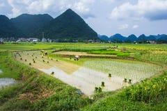 Giacimento del riso dell'agricoltore del Vietnam Immagini Stock Libere da Diritti