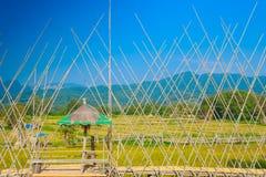 Giacimento del riso dell'agricoltore e del sole di mattina, in Tailandia Fotografia Stock