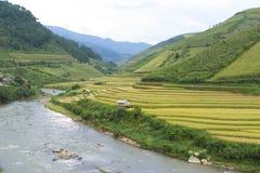 Giacimento del riso dell'Asia raccogliendo stagione nel distretto della MU Cang Chai, Yen Bai, Vietnam Le risaie a terrazze sono  Fotografie Stock Libere da Diritti