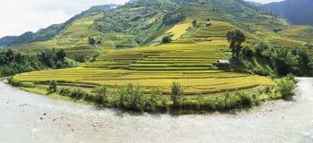 Giacimento del riso dell'Asia raccogliendo stagione nel distretto della MU Cang Chai, Yen Bai, Vietnam Le risaie a terrazze sono  Immagini Stock