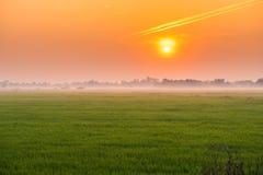 Giacimento del riso della natura con il tramonto Immagini Stock Libere da Diritti