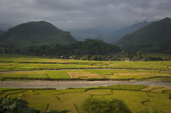 Giacimento del riso della valle sulla stagione del raccolto Immagine Stock Libera da Diritti