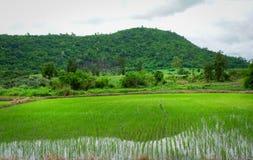 Giacimento del riso di agricoltura alle montagne della strada e del Laos Immagine Stock