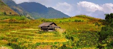 Giacimento del riso di agricoltura del villaggio dell'Asia Fotografie Stock Libere da Diritti