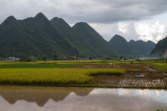 Giacimento del riso di Bac Son Fotografie Stock