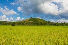 Giacimento del riso di mattina in Tailandia Immagine Stock Libera da Diritti